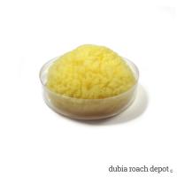 Sea Sponge Water Dish product image 1